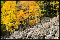 Aspens and boulders in autumn. Rocky Mountain National Park ( color)