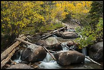 Stream above Alberta Falls in autumn. Rocky Mountain National Park ( color)