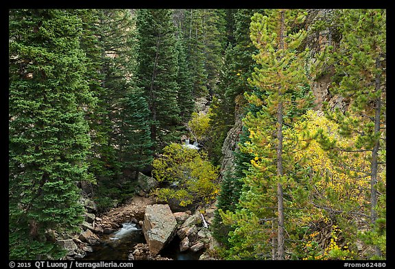 Stream flowing in forested gorge. Rocky Mountain National Park (color)