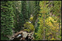 Stream flowing in forested gorge. Rocky Mountain National Park ( color)