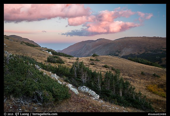 Krumholtz and alpine tundra at sunset. Rocky Mountain National Park (color)