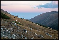 Alpine tundra at sunset with Elk. Rocky Mountain National Park ( color)