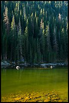 Boulders and forest on Dream Lake shore. Rocky Mountain National Park ( color)