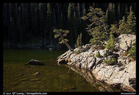 Trees on shore of Dream Lake. Rocky Mountain National Park (color)