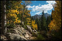 Longs Peak seen from forest opening in autumn. Rocky Mountain National Park ( color)