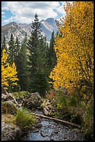 Stream, autumn foliage, and Longs Peak. Rocky Mountain National Park ( color)