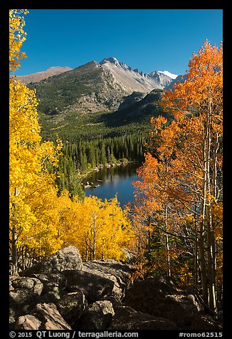 Yellow and orange aspens framing Bear Lake and Longs Peak. Rocky Mountain National Park (color)