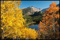 Autumn foliage above Bear Lake. Rocky Mountain National Park ( color)