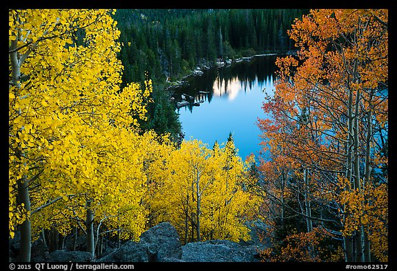 Aspen in autumn foliage and Bear Lake. Rocky Mountain National Park (color)