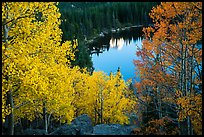 Aspen in autumn foliage and Bear Lake. Rocky Mountain National Park, Colorado, USA.