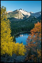 Longs Peaks, Bear Lake, yellow and orange aspens. Rocky Mountain National Park ( color)