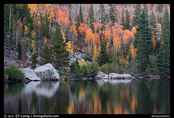 Autumn Color on the slopes around Bear Lake. Rocky Mountain National Park (color)