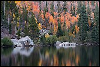Autumn Color on the slopes around Bear Lake. Rocky Mountain National Park, Colorado, USA.