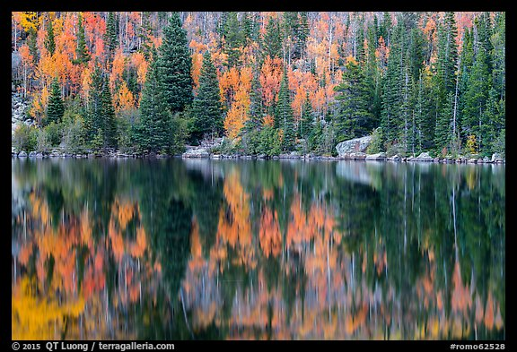 Autumn foliage color and reflections in Bear Lake. Rocky Mountain National Park (color)