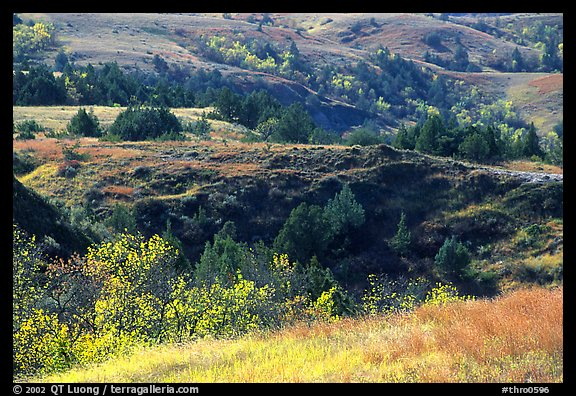 Grasses, badlands and trees in North unit, autumn. Theodore Roosevelt National Park (color)