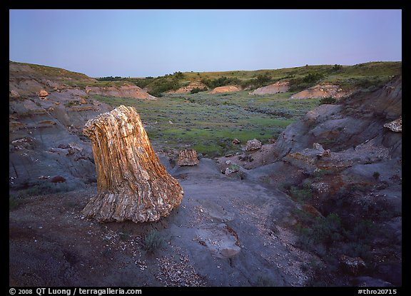 Petrified log stump at dusk, South Unit. Theodore Roosevelt  National Park (color)