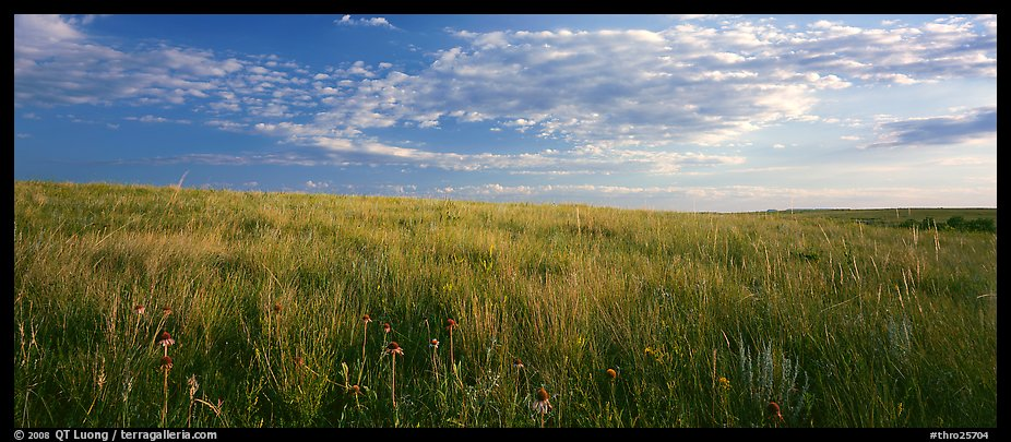 Tall grass prairie landscape, South Unit. Theodore Roosevelt National Park (color)