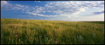 Tall grass prairie landscape, South Unit. Theodore Roosevelt National Park (Panoramic color)