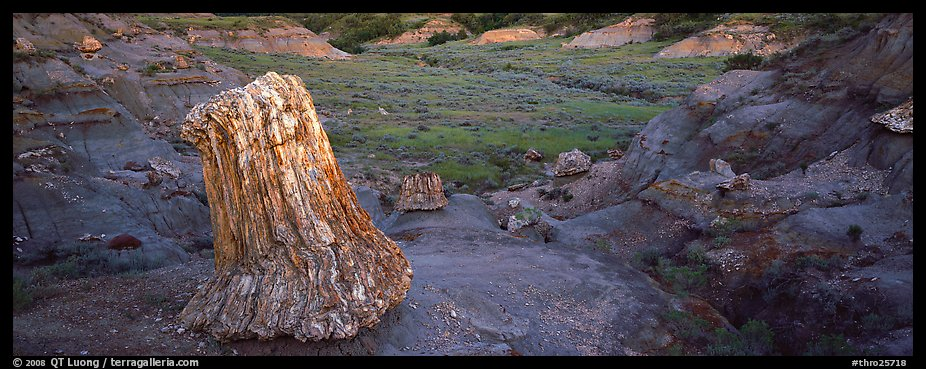 Petrified stump. Theodore Roosevelt National Park (color)