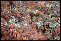 Close-up of red rocks with lichen. Theodore Roosevelt National Park, North Dakota, USA. (color)