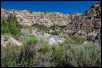 Summer vegetation and multi-colored badlands. Theodore Roosevelt National Park ( color)