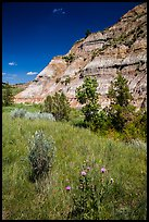 Summer wildflowers and badlands. Theodore Roosevelt National Park ( color)