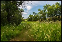 Trail, tall grasses, and cottonwoods, Elkhorn Ranch Unit. Theodore Roosevelt National Park ( color)
