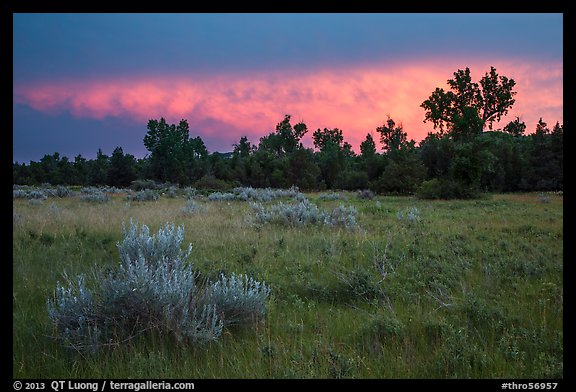Meadow and cottonwoods at sunset, Elkhorn Ranch Unit. Theodore Roosevelt National Park (color)