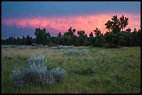 Meadow and cottonwoods at sunset, Elkhorn Ranch Unit. Theodore Roosevelt National Park ( color)