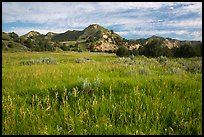 Meadow and badlands, early morning, Elkhorn Ranch Unit. Theodore Roosevelt National Park ( color)