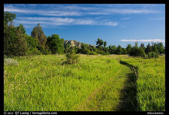 Trail through meadow, cottowoods and distant badlands, Elkhorn Ranch Unit. Theodore Roosevelt National Park, North Dakota, USA.