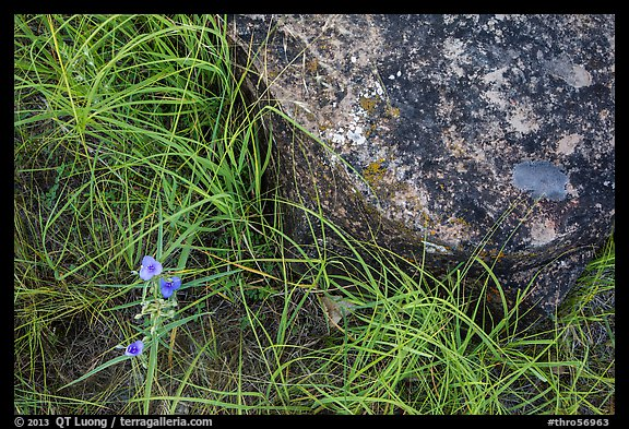 Close-up of flowers, grasses, and foundation stone of Elkhorn Ranch. Theodore Roosevelt National Park (color)