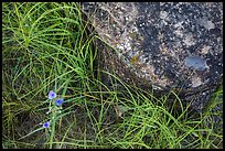 Close-up of flowers, grasses, and foundation stone of Elkhorn Ranch. Theodore Roosevelt National Park ( color)