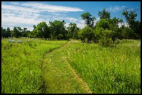 Trail overgrown with grasses, Elkhorn Ranch Unit. Theodore Roosevelt National Park, North Dakota, USA. (color)