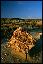 Colorful Petrified stump. Theodore Roosevelt National Park ( color)