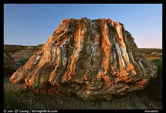 Petrified stump of ancient sequoia tree, late afternoon. Theodore Roosevelt National Park (color)