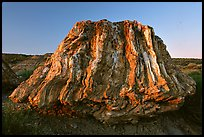 Petrified stump of ancient sequoia tree, late afternoon. Theodore Roosevelt National Park ( color)