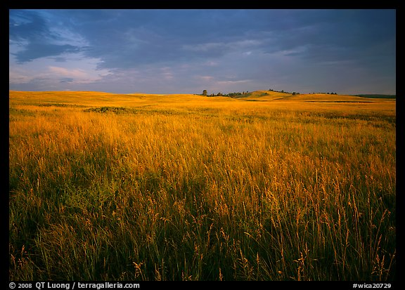 Tall prairie grass and dark sky at Bison Flats, early morning. Wind Cave National Park (color)