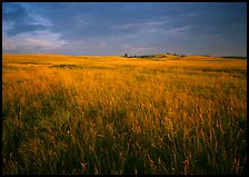 Tall prairie grass and dark sky at Bison Flats, early morning. Wind Cave National Park, South Dakota, USA.