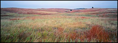 Prairie grasses on cloudy autumn morning. Wind Cave National Park (Panoramic color)