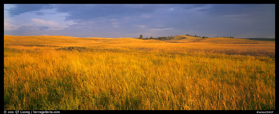 Prairie grasses at sunrise. Wind Cave National Park (color)