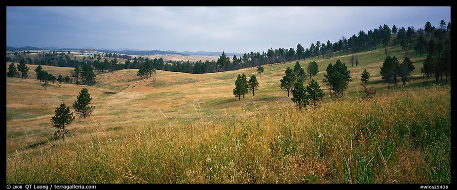 Prairie, hills, and Ponderosa pine trees. Wind Cave National Park (color)