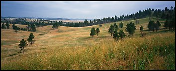 Prairie, hills, and Ponderosa pine trees. Wind Cave National Park (Panoramic color)