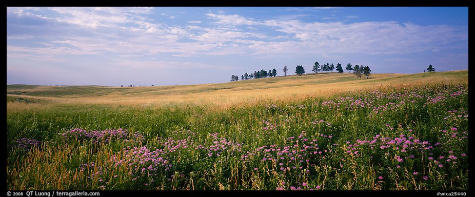 Prairie landscape with wildflowers and trees. Wind Cave National Park (color)