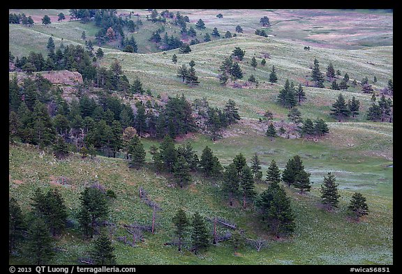 Rolling hills with ponderosa pines and grasslands. Wind Cave National Park (color)
