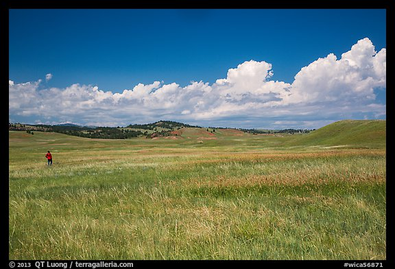 Park visitor looking, prairie and rolling hills. Wind Cave National Park (color)