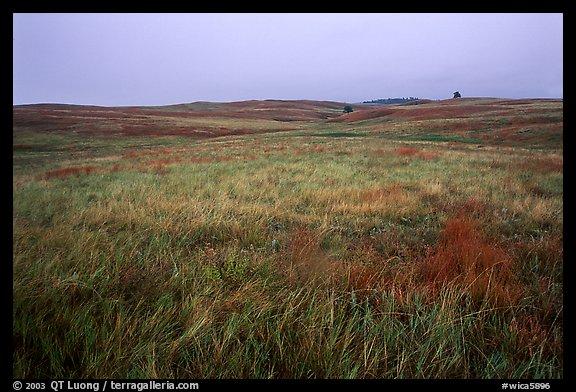Picture Photo Tallgrass Prairie Wind Cave National Park
