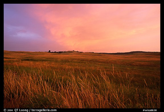 Tall grasses and pink cloud, sunrise. Wind Cave National Park (color)