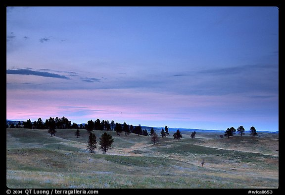 Rolling hills covered with scattered pines, dusk. Wind Cave National Park (color)