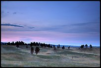 Rolling hills covered with scattered pines, dusk. Wind Cave National Park, South Dakota, USA.